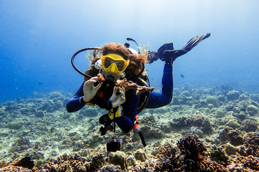 diver picking up coral