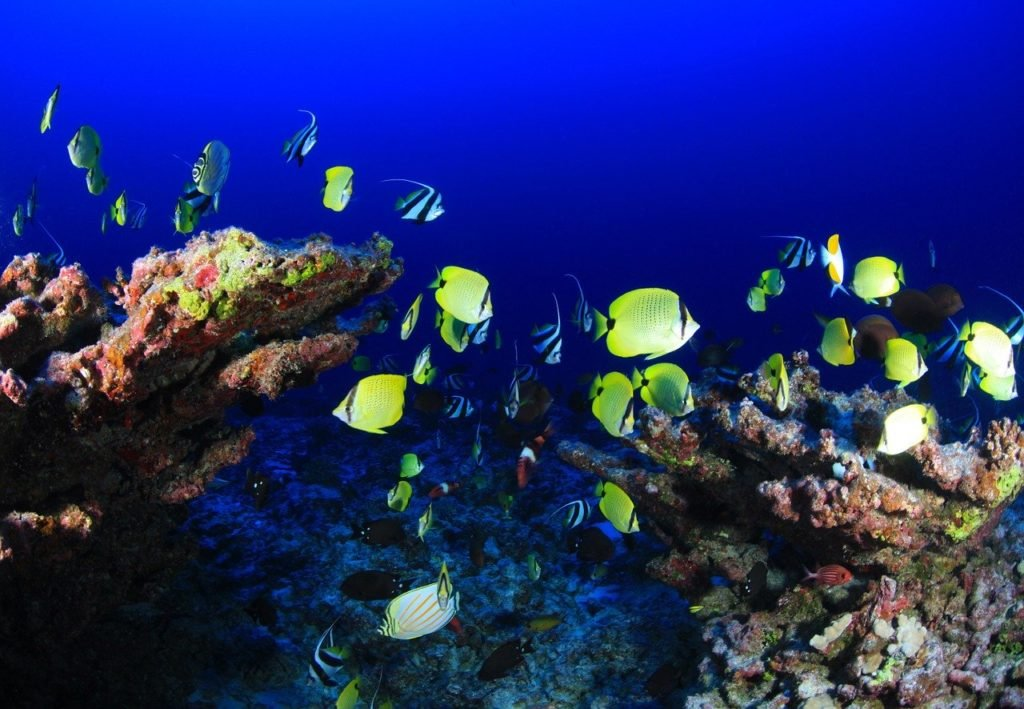 Reef fish diving in the maldives