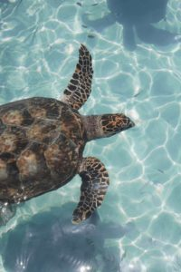scuba-diving-in-mexico-cancun-turtle