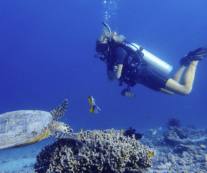 Are you buzzing to learn how to scuba dive? Check out ScubaOtter to learn all about it