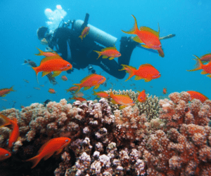 When drift diving, use the coral reefs as protection from strong currents if you're becoming tired.