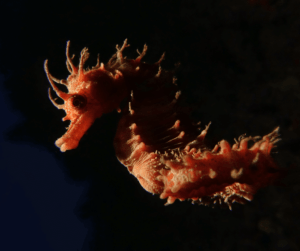 Seahorses don't taste very nice! They don't have very many predators for that very reason.